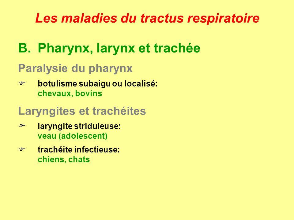 Les maladies du tractus respiratoire B.Pharynx, larynx et trachée Paralysie du pharynx botulisme subaigu ou localisé: chevaux, bovins Laryngites et tr