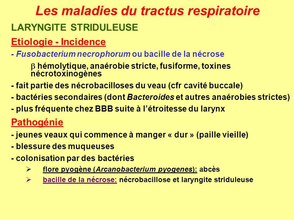 Les maladies du tractus respiratoire LARYNGITE STRIDULEUSE Etiologie - Incidence - Fusobacterium necrophorum ou bacille de la nécrose hémolytique, ana