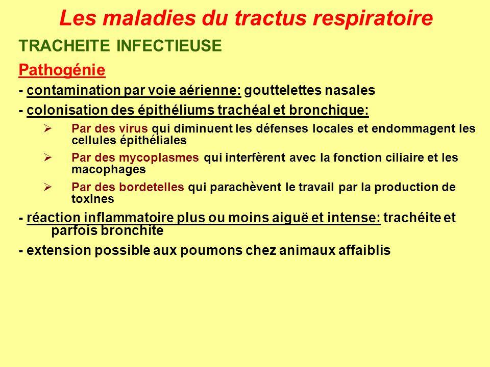 Les maladies du tractus respiratoire TRACHEITE INFECTIEUSE Pathogénie - contamination par voie aérienne: gouttelettes nasales - colonisation des épith