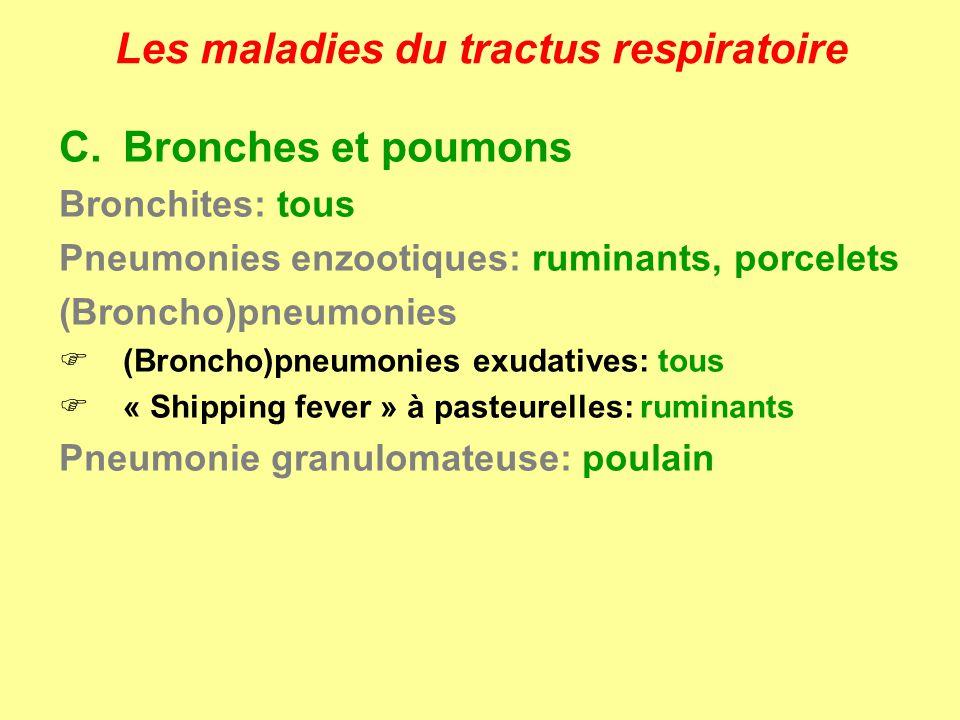 Les maladies du tractus respiratoire C.Bronches et poumons Bronchites: tous Pneumonies enzootiques: ruminants, porcelets (Broncho)pneumonies (Broncho)
