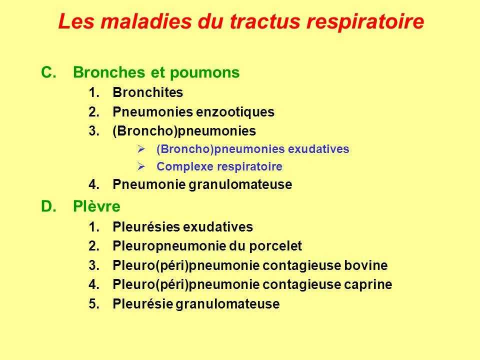 Les maladies du tractus respiratoire PNEUMONIES ENZOOTIQUES Pathogénie - infection par voie aérienne et contact direct (adultes = porteurs sains) - colonisation de la trachée, des bronches et des bronchioles (adhésines) - perte fonctionelle/structurelle des cils, desquamation des cellules - extension aux lobes antérieurs des poumons - infections secondaires (voir pneumonies exudatives et pleuropneumonie) - envahissement: mycoplasmémie et infections dorganes internes