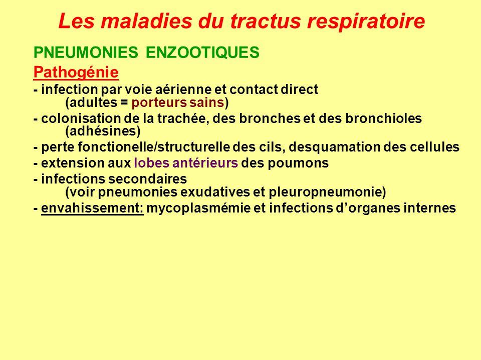 Les maladies du tractus respiratoire PNEUMONIES ENZOOTIQUES Pathogénie - infection par voie aérienne et contact direct (adultes = porteurs sains) - co
