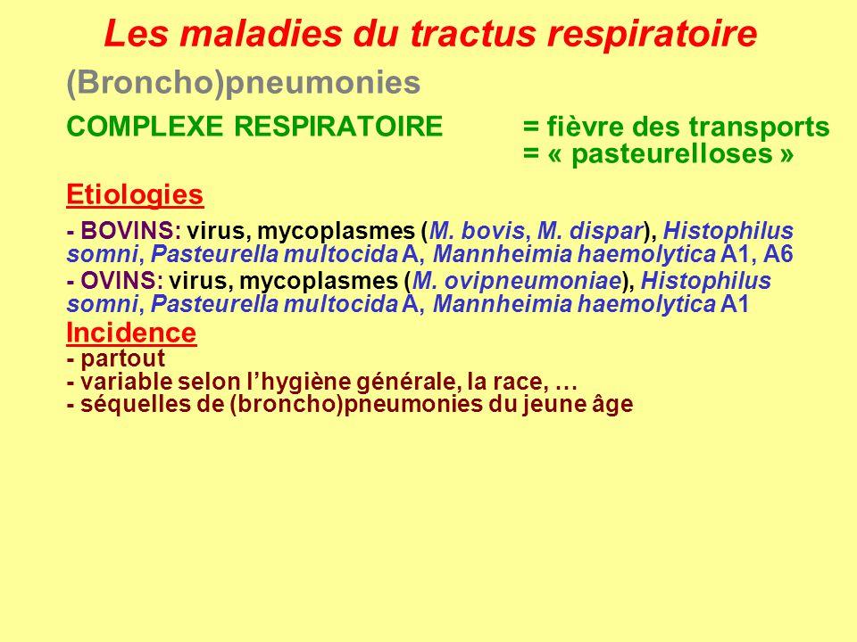 Les maladies du tractus respiratoire (Broncho)pneumonies COMPLEXE RESPIRATOIRE = fièvre des transports = « pasteurelloses » Etiologies - BOVINS: virus