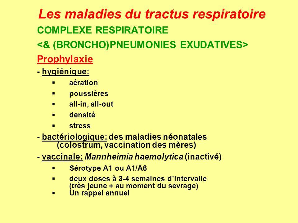 Les maladies du tractus respiratoire COMPLEXE RESPIRATOIRE Prophylaxie - hygiénique: aération poussières all-in, all-out densité stress - bactériologi