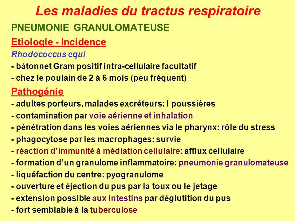 Les maladies du tractus respiratoire PNEUMONIE GRANULOMATEUSE Etiologie - Incidence Rhodococcus equi - bâtonnet Gram positif intra-cellulaire facultat