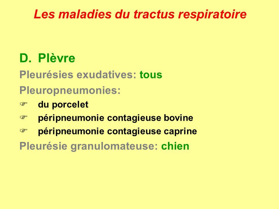 Les maladies du tractus respiratoire D.Plèvre Pleurésies exudatives: tous Pleuropneumonies: du porcelet péripneumonie contagieuse bovine péripneumonie
