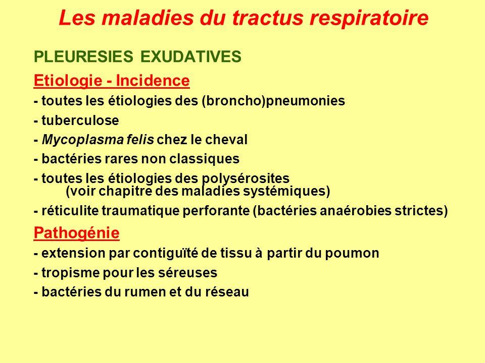 Les maladies du tractus respiratoire PLEURESIES EXUDATIVES Etiologie - Incidence - toutes les étiologies des (broncho)pneumonies - tuberculose - Mycop