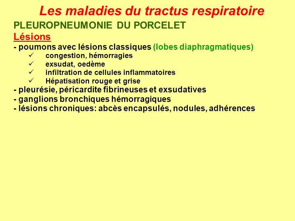Les maladies du tractus respiratoire PLEUROPNEUMONIE DU PORCELET Lésions - poumons avec lésions classiques (lobes diaphragmatiques) congestion, hémorr