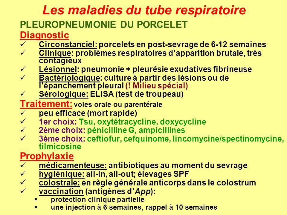 Les maladies du tube respiratoire PLEUROPNEUMONIE DU PORCELET Diagnostic Circonstanciel: porcelets en post-sevrage de 6-12 semaines Clinique: problème