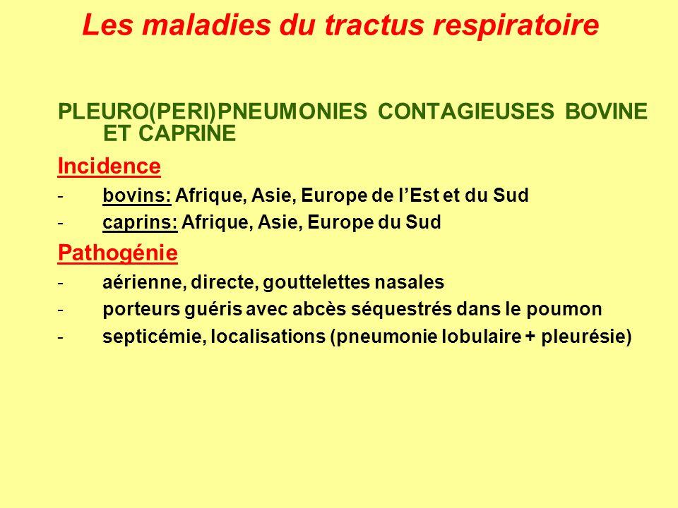 Les maladies du tractus respiratoire PLEURO(PERI)PNEUMONIES CONTAGIEUSES BOVINE ET CAPRINE Incidence -bovins: Afrique, Asie, Europe de lEst et du Sud