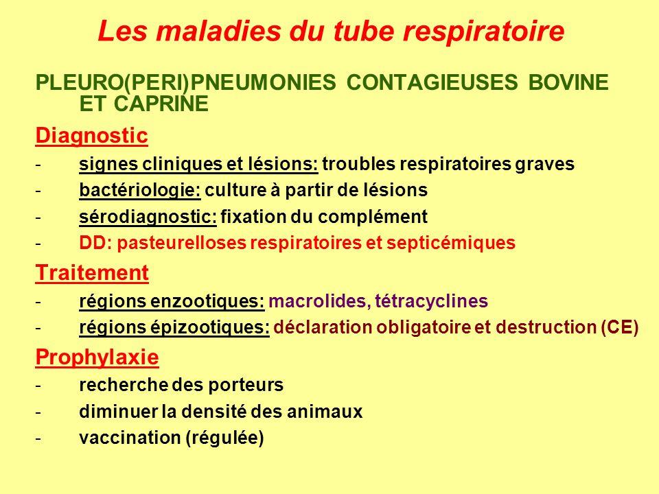 Les maladies du tube respiratoire PLEURO(PERI)PNEUMONIES CONTAGIEUSES BOVINE ET CAPRINE Diagnostic -signes cliniques et lésions: troubles respiratoire