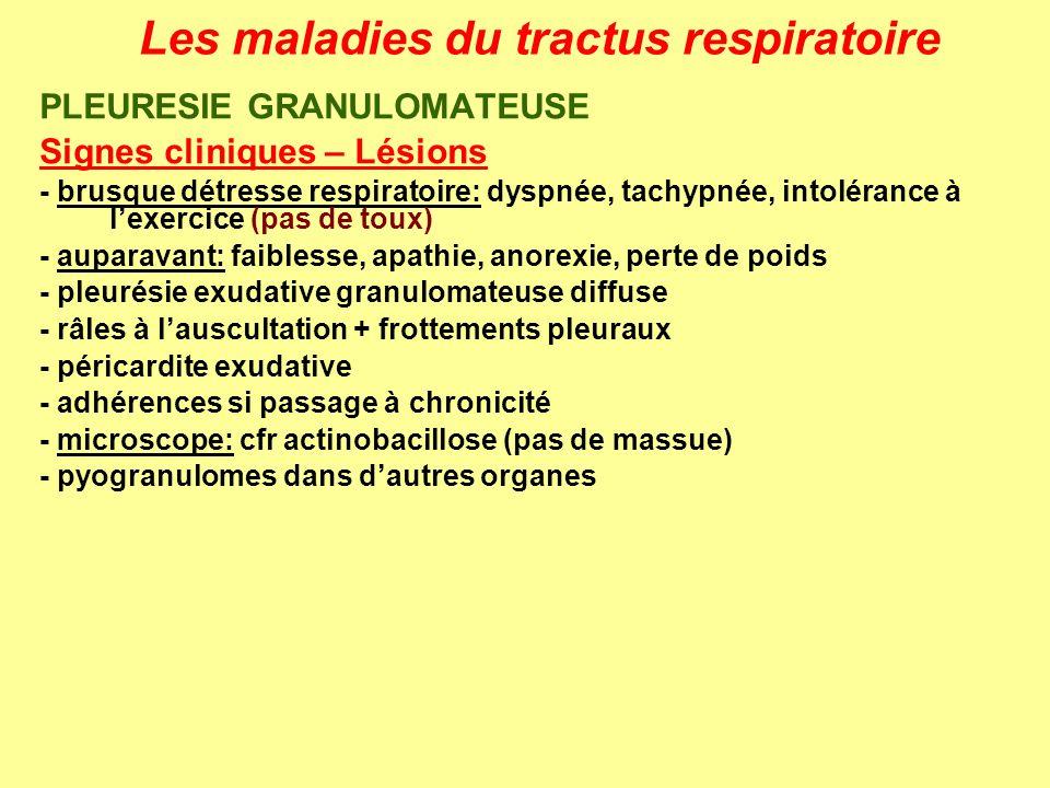 Les maladies du tractus respiratoire PLEURESIE GRANULOMATEUSE Signes cliniques – Lésions - brusque détresse respiratoire: dyspnée, tachypnée, intoléra