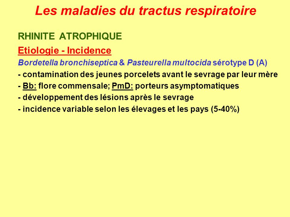 Les maladies du tractus respiratoire PLEURESIE GRANULOMATEUSE Signes cliniques – Lésions - brusque détresse respiratoire: dyspnée, tachypnée, intolérance à lexercice (pas de toux) - auparavant: faiblesse, apathie, anorexie, perte de poids - pleurésie exudative granulomateuse diffuse - râles à lauscultation + frottements pleuraux - péricardite exudative - adhérences si passage à chronicité - microscope: cfr actinobacillose (pas de massue) - pyogranulomes dans dautres organes