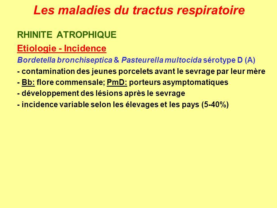 Les maladies du tractus respiratoire B.Pharynx, larynx et trachée Paralysie du pharynx botulisme subaigu ou localisé: chevaux, bovins Laryngites et trachéites laryngite striduleuse: veau (adolescent) trachéite infectieuse: chiens, chats