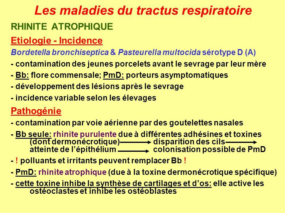 Les maladies du tractus respiratoire RHINITE ATROPHIQUE Signes cliniques – Lésions - éternuements, toux - déviation de la mâchoire supérieure - raccourcissement de la mâchoire supérieure - complications profondes - rhinite purulente catarrhale - atrophie des cornets (stades 1 à 5): lègère déviation légère atrophie atrophie sévère perte dau moins un cornet perte de tous les cornets (4 semaines) - complications profondes possibles (bronchopneumonies) - perte des cils des cellules épithéliales - infiltration de neutrophiles