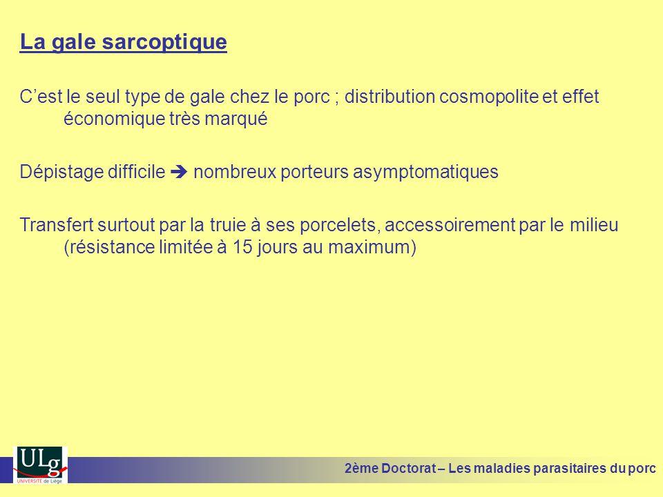 La gale sarcoptique Cest le seul type de gale chez le porc ; distribution cosmopolite et effet économique très marqué Dépistage difficile nombreux por