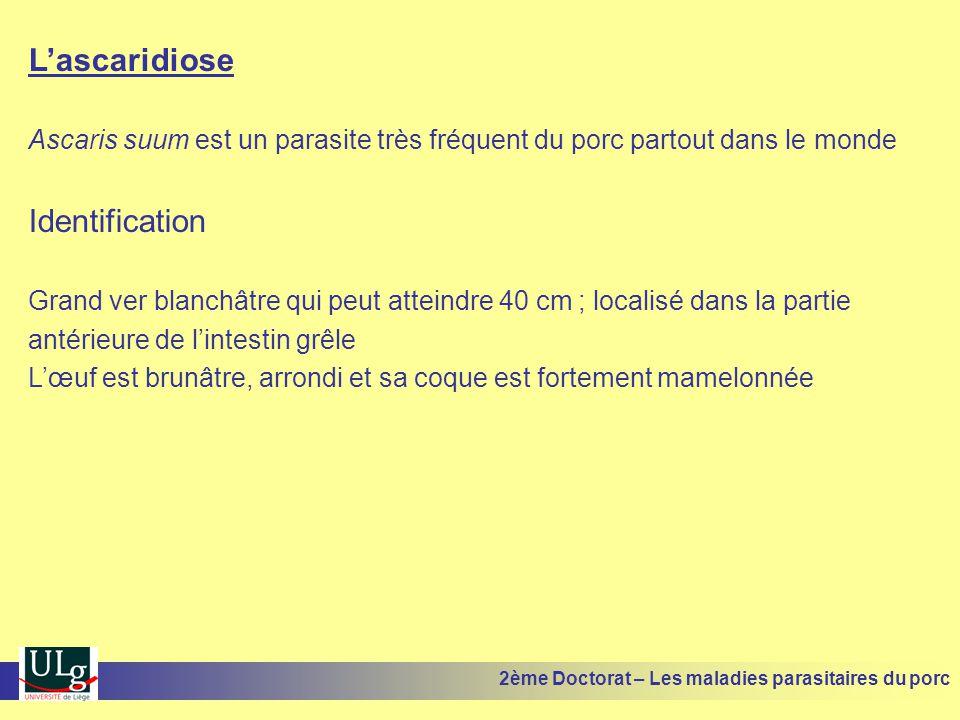 Lascaridiose Ascaris suum est un parasite très fréquent du porc partout dans le monde Identification Grand ver blanchâtre qui peut atteindre 40 cm ; l