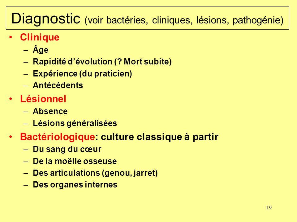 19 Diagnostic (voir bactéries, cliniques, lésions, pathogénie) Clinique –Âge –Rapidité dévolution (? Mort subite) –Expérience (du praticien) –Antécéde