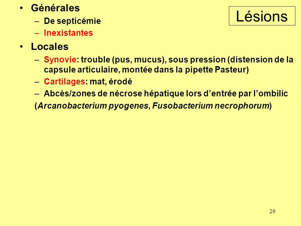 29 Lésions Générales –De septicémie –Inexistantes Locales –Synovie: trouble (pus, mucus), sous pression (distension de la capsule articulaire, montée
