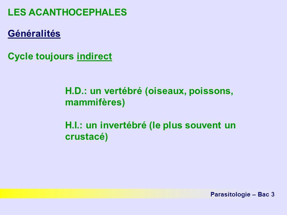 LES ACANTHOCEPHALES Généralités Cycle toujours indirect H.D.: un vertébré (oiseaux, poissons, mammifères) H.I.: un invertébré (le plus souvent un crus