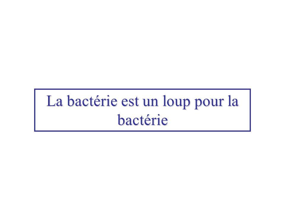 La bactérie est un loup pour la bactérie
