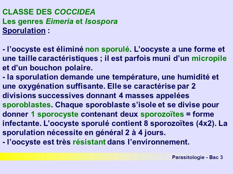 CLASSE DES COCCIDEA Les genres Eimeria et Isospora Sporulation : - loocyste est éliminé non sporulé. Loocyste a une forme et une taille caractéristiqu