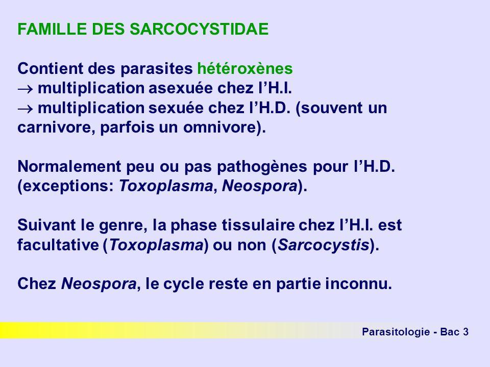 Parasitologie - Bac 3 FAMILLE DES SARCOCYSTIDAE Contient des parasites hétéroxènes multiplication asexuée chez lH.I. multiplication sexuée chez lH.D.