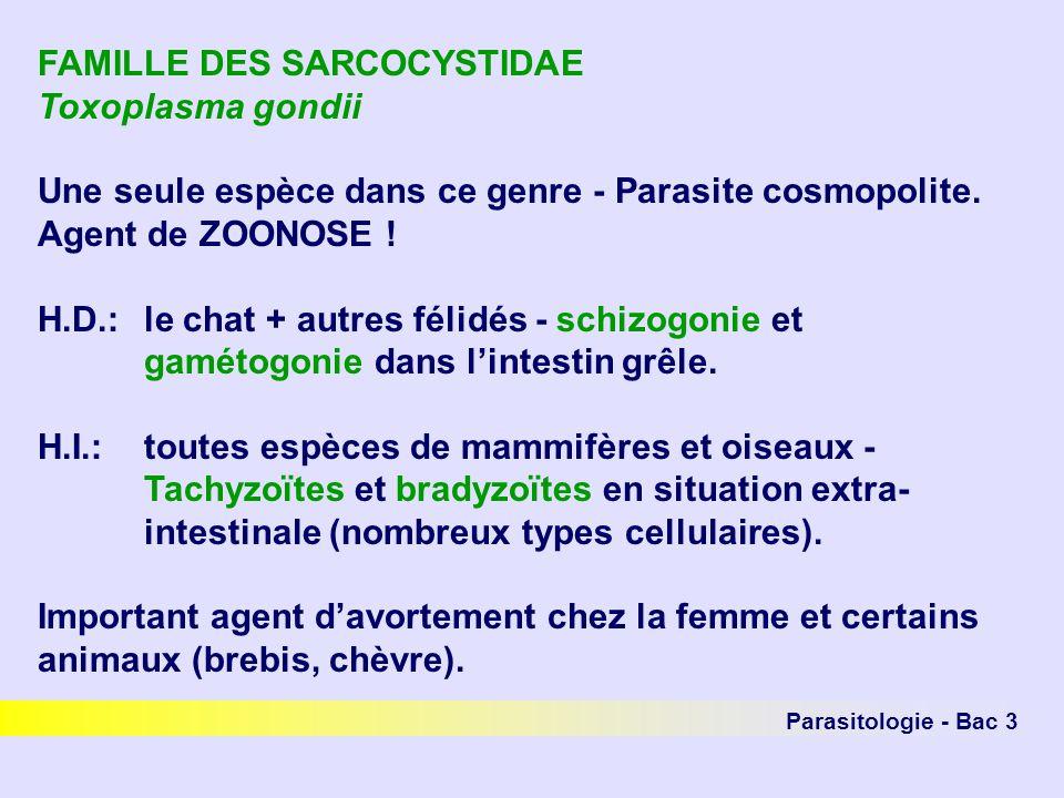 Parasitologie - Bac 3 FAMILLE DES SARCOCYSTIDAE Toxoplasma gondii Une seule espèce dans ce genre - Parasite cosmopolite. Agent de ZOONOSE ! H.D.: le c