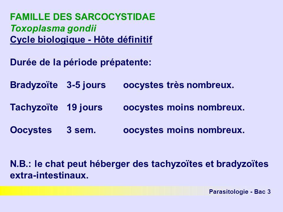 Parasitologie - Bac 3 FAMILLE DES SARCOCYSTIDAE Toxoplasma gondii Cycle biologique - Hôte définitif Durée de la période prépatente: Bradyzoïte3-5 joursoocystes très nombreux.