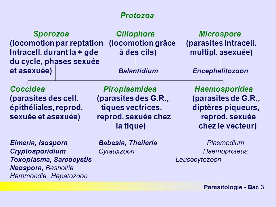Parasitologie - Bac 3 Protozoa SporozoaCiliophoraMicrospora (locomotion par reptation (locomotion grâce (parasites intracell. Intracell. durant la + g