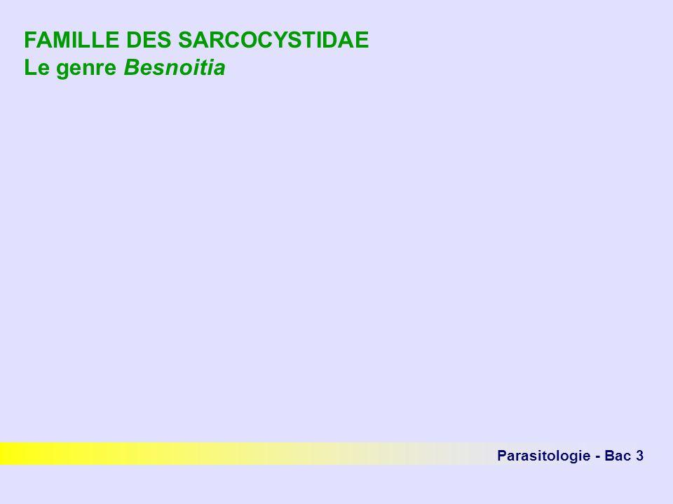 Parasitologie - Bac 3 FAMILLE DES SARCOCYSTIDAE Le genre Besnoitia