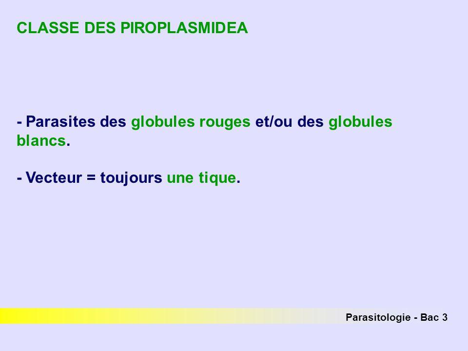 Parasitologie - Bac 3 CLASSE DES PIROPLASMIDEA - Parasites des globules rouges et/ou des globules blancs. - Vecteur = toujours une tique.