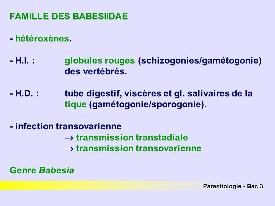 Parasitologie - Bac 3 FAMILLE DES BABESIIDAE - hétéroxènes. - H.I. : globules rouges (schizogonies/gamétogonie) des vertébrés. - H.D. : tube digestif,