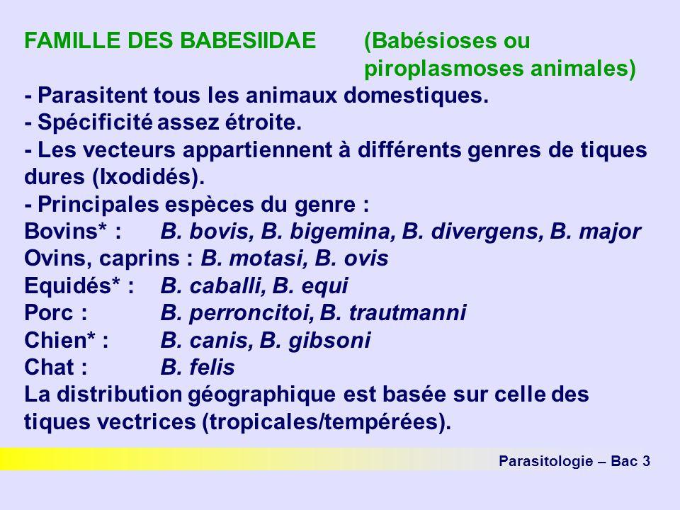 Parasitologie – Bac 3 FAMILLE DES BABESIIDAE (Babésioses ou piroplasmoses animales) - Parasitent tous les animaux domestiques. - Spécificité assez étr