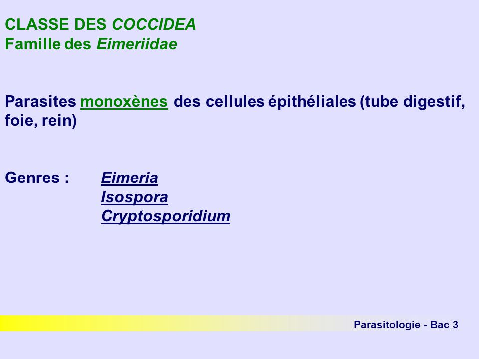 Parasitologie - Bac 3 CLASSE DES COCCIDEA Famille des Eimeriidae Parasites monoxènes des cellules épithéliales (tube digestif, foie, rein) Genres :Eimeria Isospora Cryptosporidium