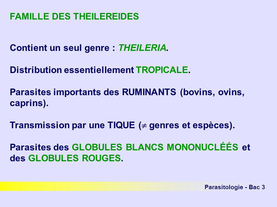 Parasitologie - Bac 3 FAMILLE DES THEILEREIDES Contient un seul genre : THEILERIA. Distribution essentiellement TROPICALE. Parasites importants des RU