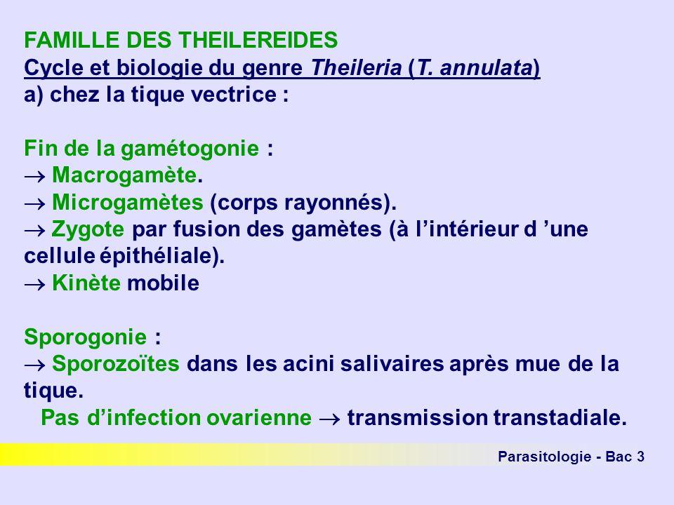 FAMILLE DES THEILEREIDES Cycle et biologie du genre Theileria (T.