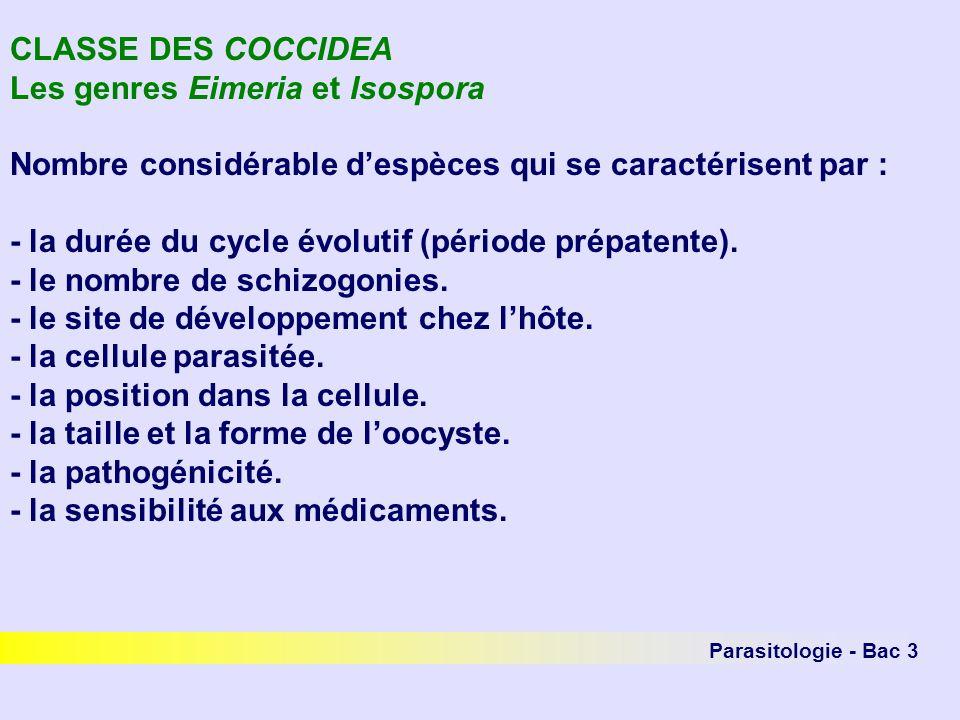 Parasitologie - Bac 3 FAMILLE DES THEILERIIDAE - hétéroxènes.