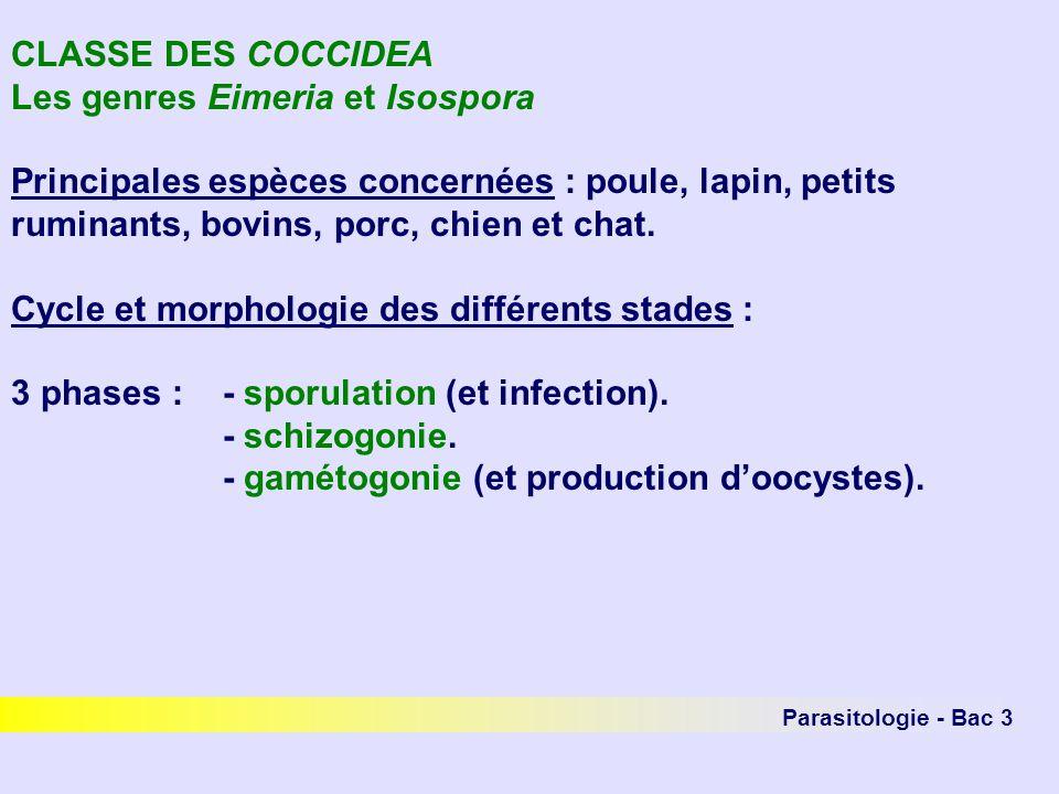 Parasitologie - Bac 3