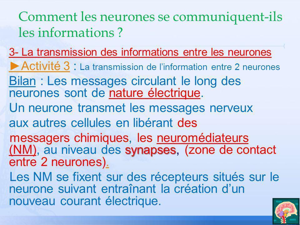 3- La transmission des informations entre les neurones Activité 3Activité 3 : La transmission de linformation entre 2 neurones Bilan : Les messages ci