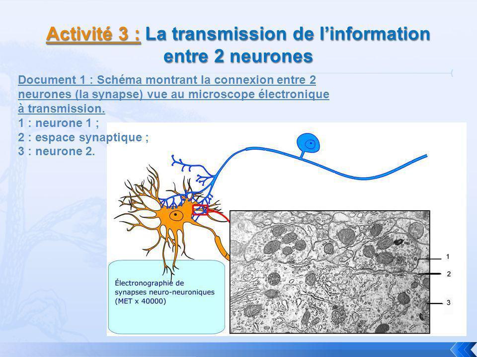Document 1 : Schéma montrant la connexion entre 2 neurones (la synapse) vue au microscope électronique à transmission. 1 : neurone 1 ; 2 : espace syna