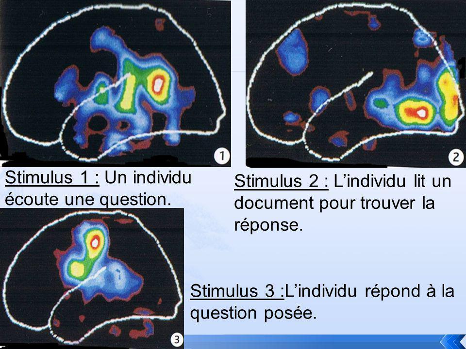 Stimulus 1 : Un individu écoute une question.