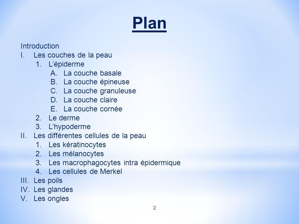 2 Plan Introduction I.Les couches de la peau 1.Lépiderme A.La couche basale B.La couche épineuse C.La couche granuleuse D.La couche claire E.La couche