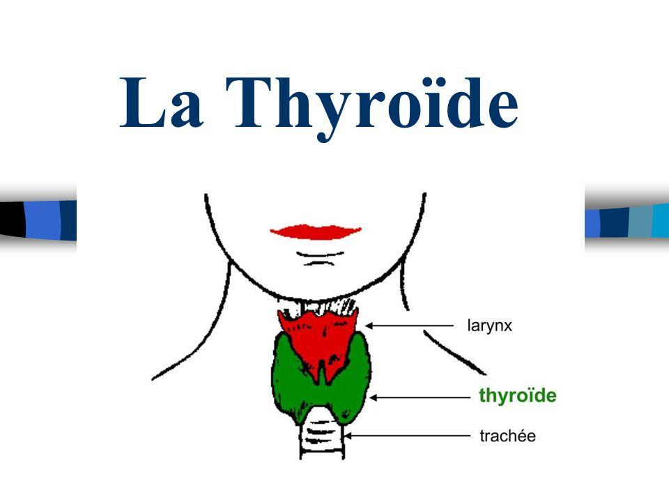 La Thyroïde