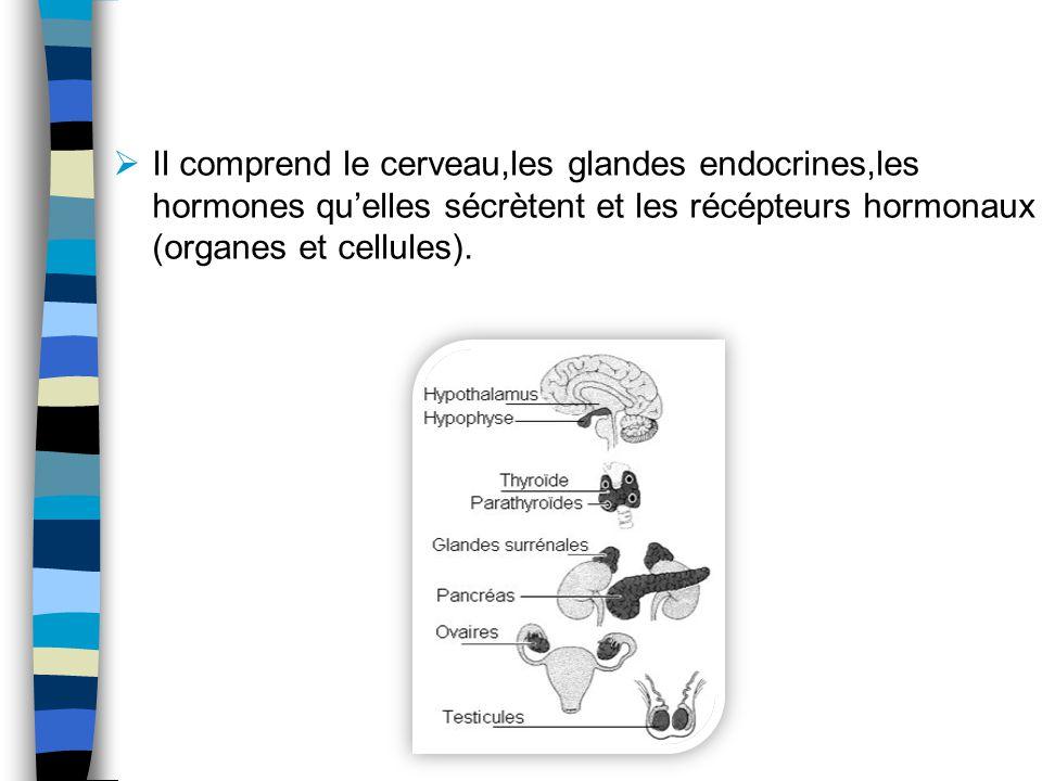 Il comprend le cerveau,les glandes endocrines,les hormones quelles sécrètent et les récépteurs hormonaux (organes et cellules).