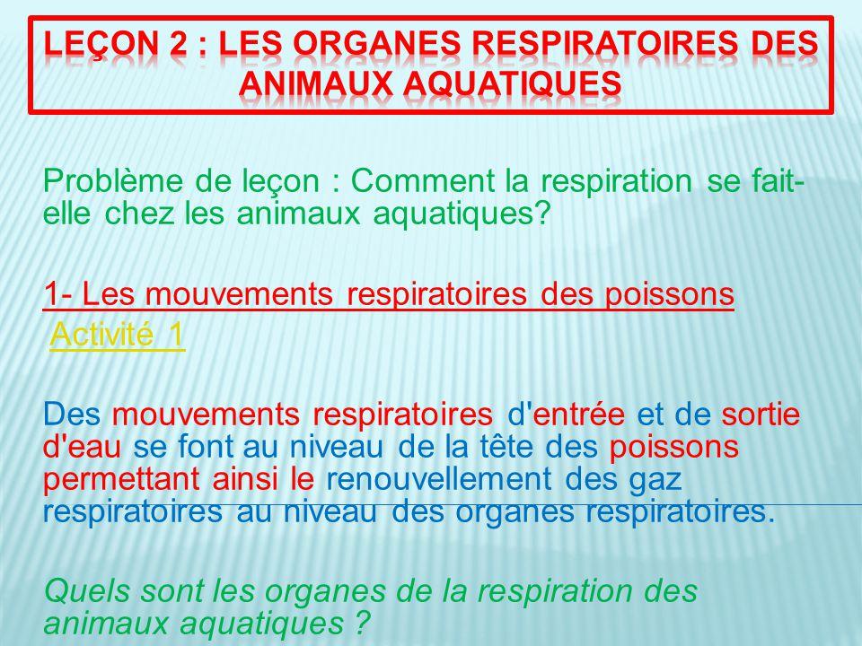 2- LES ORGANES RESPIRATOIRES DES ANIMAUX AQUATIQUES Activité 2 Les poissons respirent grâce à des branchies, de couleur rouge (à cause de la présence de sang), et composées de nombreux filaments branchiaux (ce qui représente une grande surface).