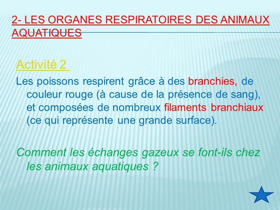 2- LES ORGANES RESPIRATOIRES DES ANIMAUX AQUATIQUES Activité 2 Les poissons respirent grâce à des branchies, de couleur rouge (à cause de la présence