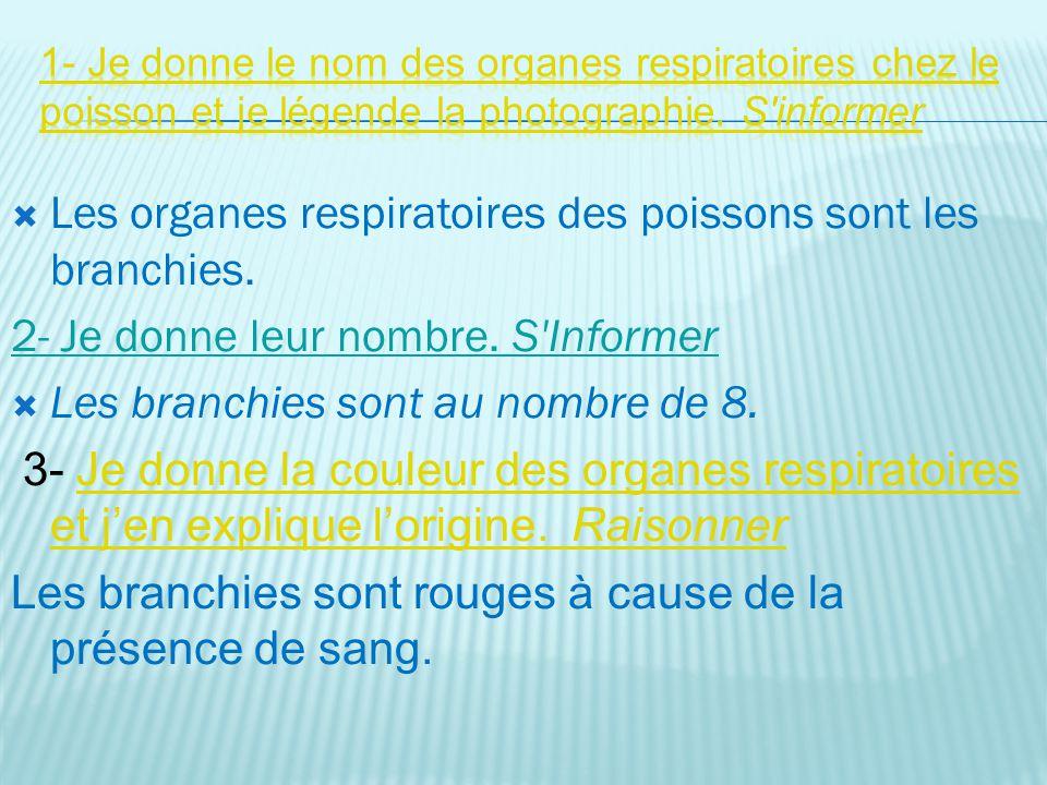 Les organes respiratoires des poissons sont les branchies.