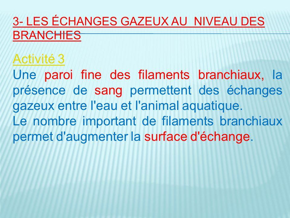 3- LES ÉCHANGES GAZEUX AU NIVEAU DES BRANCHIES Activité 3 Une paroi fine des filaments branchiaux, la présence de sang permettent des échanges gazeux entre l eau et l animal aquatique.