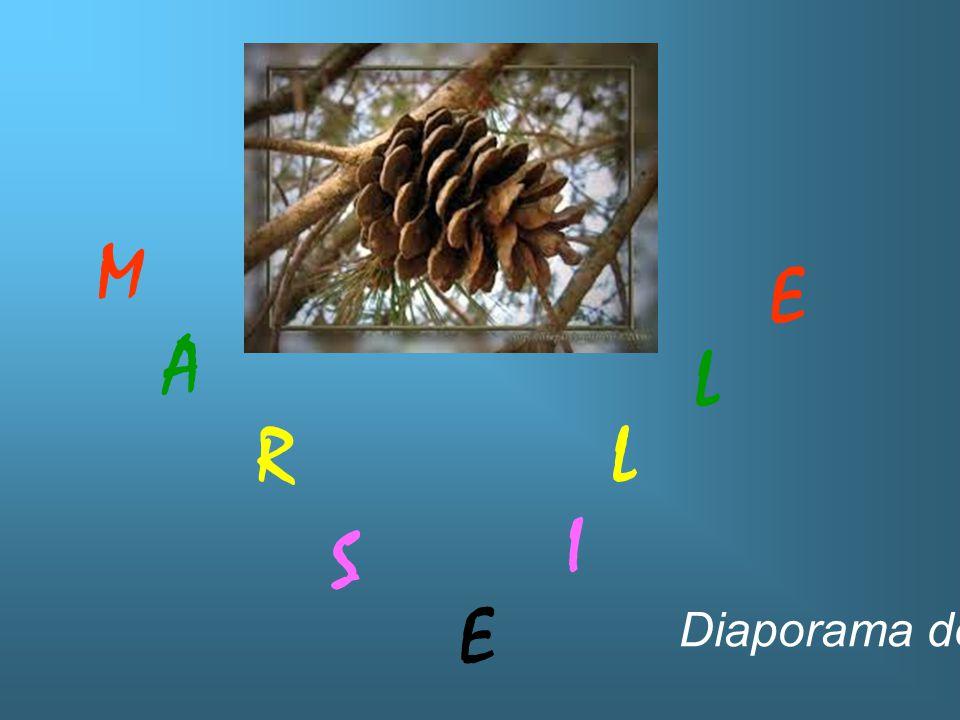 Lou Mistrau à Marsiho es dangerous, fau bèn se téni: Le Mistral à Marseille est dangereux, faut bien se tenir!